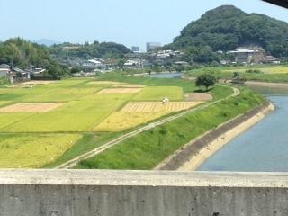 田んぼのパッチワーク.JPG